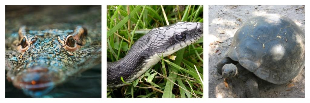 reptile définition
