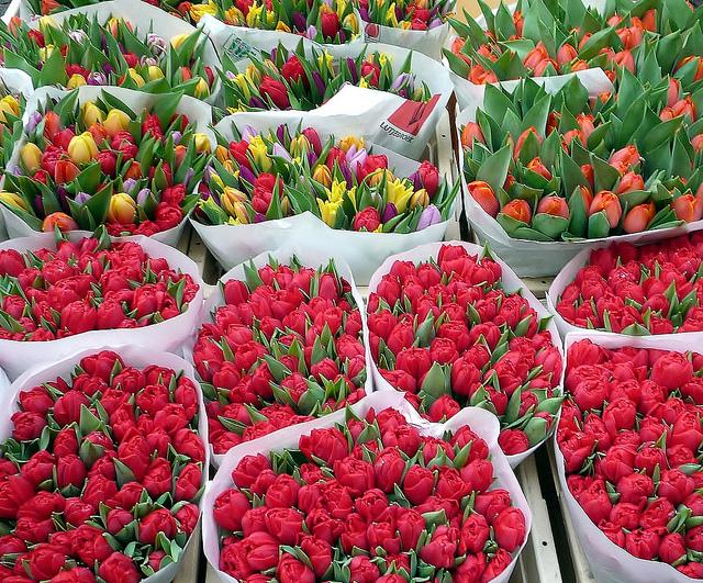 tulipes par Dietmut CC@Flickr